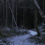 pjm-nachtwald-web